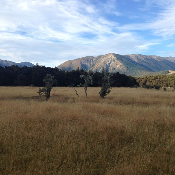 Dog-friendly freedom camping in Nelson Lakes